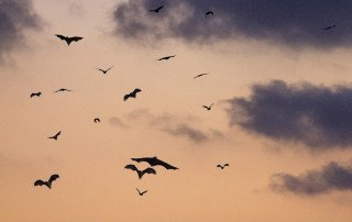 bats in clouds
